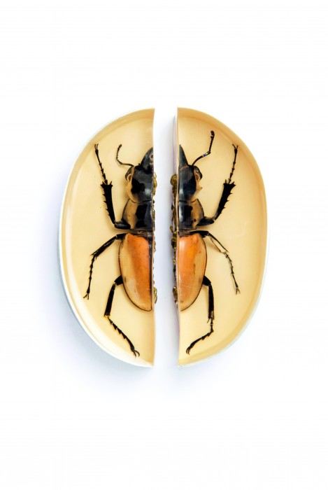 Märta Mattsson. Split, 2013, Necklace, copper electroformed beetle, driftwood, silver, cubic zirkonias, resin, lacquer, 35 x 20 x 6 cm